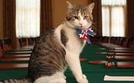 Trong khi chính trường Anh chao đảo, giới truyền thông lại bị thu hút bởi chú mèo nhà Thủ tướng