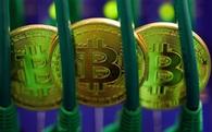 Bitcoin và cảnh báo về 'Hội chứng hoa Tulip' kinh điển của CEO JP Morgan Chase