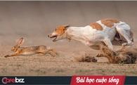 """Chuyện chó săn bắt thỏ và bài học """"chạy để giữ mạng sống"""" bất cứ ai đi làm cũng cần phải biết"""