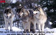 'Dẫn dụ sói vào đàn hươu': Vì sao bạn đang làm rất tốt, sếp vẫn tuyển thêm người, thậm chí là người giỏi hơn?