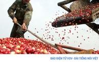 Nông sản trong hội nhập đảm bảo an toàn là trên hết