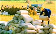 5 năm đi bán ở xứ người, nông sản Việt ngậm ngùi đi ngang