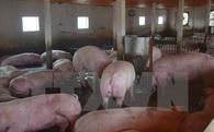 Người chăn nuôi Đồng Nai tự đưa thịt lợn đến tay người tiêu dùng
