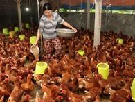 """Vụ kiện gà Mỹ bán phá giá và """"luật chơi"""" của TPP"""
