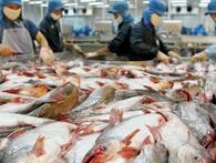 Sự nhân đạo của người Nhật: Không nhập khẩu những con cá phải chết đau đớn tại Việt Nam