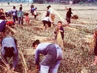 Những hình ảnh ấn tượng về nông thôn Trung Quốc 1980 sau thời kỳ cải cách mở cửa kinh tế