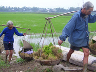 World Bank: Người Việt già quá nhanh, giờ là lúc tìm đến lao động trẻ các nước láng giềng