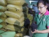 """Sự thật về cà phê """"nguyên chất"""" - Kỳ 1: Đủ chiêu độn cà phê"""