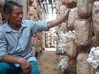 Từ người làm thuê trở thành chủ trang trại nấm tiền tỷ