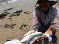 Hiện tượng cá chết hàng loạt: Có bao giờ bạn tự hỏi, rằng con người đã làm gì với mẹ thiên nhiên?