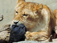 Người Nhật làm ra những chiếc quần jeans rách rưới trị giá 22 triệu đồng bằng cách khó tin thế này đây