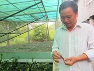 Chủ trang trại cà cuống ở Sài Gòn thu tiền triệu mỗi ngày