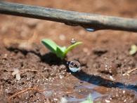"""Từ một quốc gia """"khát nước"""", Israel đã trở thành tấm gương cho thế giới như thế nào?"""