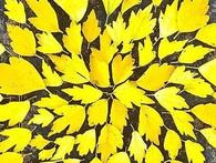 Người Nhật biến cả lá rụng thành nghệ thuật