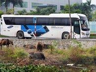 """Bloomberg: Samsung giúp nhiều nông dân Việt thành tỷ phú, """"ăn đứt"""" các nhân viên nhà băng & môi giới chứng khoán"""