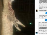 Đội lốt hảo tâm kiếm lời thông qua động vật nuôi