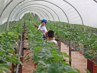 Hàng loạt doanh nghiệp Nhật đến Việt Nam tiếp thị nông nghiệp công nghệ cao