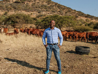 Startup biến những con bò thành công cụ tài chính hiệu quả, lãi hơn cả đầu tư chứng khoán