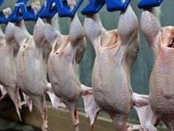 Lần đầu tiên thịt gà Việt Nam được xuất khẩu sang Nhật Bản