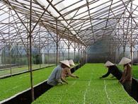 """Đầu tư vào nông nghiệp công nghệ cao: """"Thảm đỏ"""" không trải sẵn"""