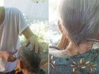 Chuyện tình 70 năm đẹp như giấc mơ của cụ ông trong bức hình tự tay cắt tóc cho vợ