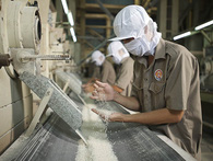 Các doanh nghiệp đang tồn kho gần 1 triệu tấn gạo
