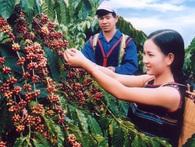 Thủ tướng đã có lời giải cho bài toán phát triển nông nghiệp Việt Nam