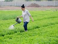 """Tâm thư từ """"gan ruột"""" của Đào Chi Anh: Làm doanh nhân khổ quá, vì cái tôi và lòng tự kiêu mà chẳng ai dám nói ra những sự thật đau lòng này!"""