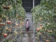 Nông nghiệp thế giới đang thay đổi, không phải vì ô nhiễm môi trường hay biến đổi khí hậu mà là do khẩu vị của 1,4 tỷ người Trung Quốc