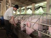 30.000 tỷ đã được ngân hàng giải ngân vào nông nghiệp công nghệ cao