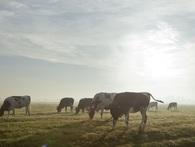 Học thuyết 'con bò' và 8 mô hình kinh doanh thú vị dành cho những ai đã, đang và sẽ trở thành doanh nhân