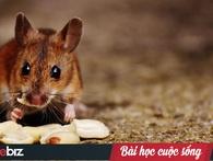 Chuyện ba con chuột ăn vụng mỡ và bài học đắt giá trong cuộc sống cho mỗi chúng ta