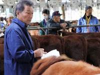 Doanh nghiệp Nhật dự tính mang hàng ngàn con bò sang chăn nuôi tại Việt Nam