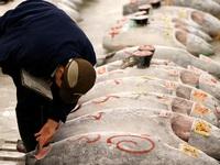 Ông chủ Nhật Bản bỏ ra hơn 14 tỷ đồng để mua một con cá