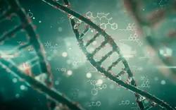 Sự căng thẳng trong những năm tháng đầu đời cũng khiến ADN của bạn bị biến đổi ít nhiều