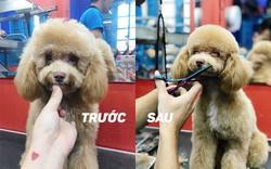Dịch vụ cắt tỉa lông chó tăng trưởng mạnh trong năm nay
