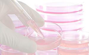 10 năm nữa, loài người có thể không cần uống thuốc trị bệnh nhờ công nghệ Tế bào gốc