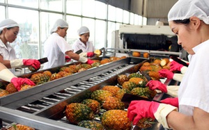 13 doanh nghiệp nhập khẩu trái cây từ UAE có dấu hiệu lừa đảo