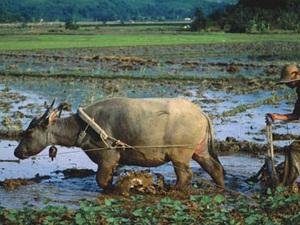 TS. Vũ Tiến Lộc: Ai bảo chăn trâu là khổ? Chúng ta có thể giàu lên bằng nông nghiệp... chứ cứ làm gia công thì không thể giàu