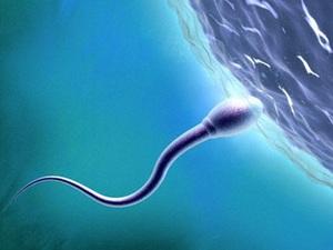 Thực hư thói quen làm đàn ông giảm khả năng sinh sản