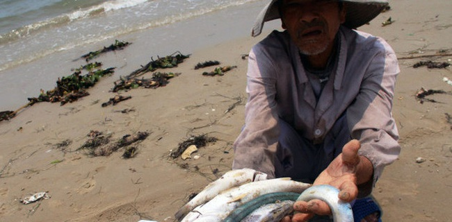 Thủy sản Việt Nam hàng năm xuất khẩu tới 8 tỷ USD, nay bị nhiều khách quốc tế hủy hợp đồng vì nhiễm kim loại nặng