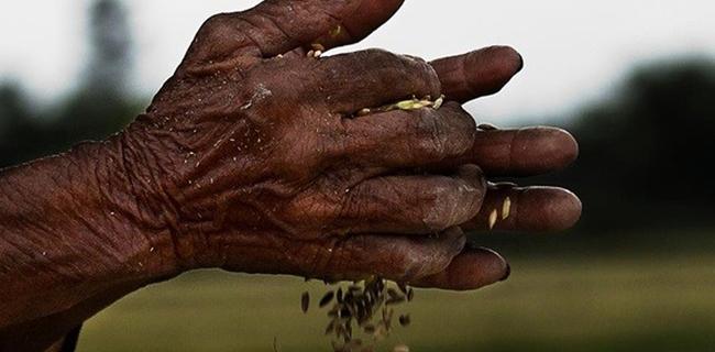 14 triệu nông dân chỉ với 78 triệu mảnh ruộng: Thiếu tích tụ ruộng đất khiến nông nghiệp Việt Nam không thể phát triển
