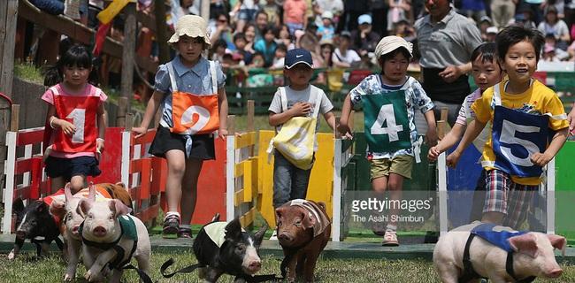 Việt Nam học được gì từ Moku Moku – mô hình nông nghiệp nghìn tỷ Nhật Bản đi lên từ 1 trại lợn suýt phá sản?