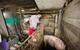 Mô hình VAC nuôi gà, lợn, chim, thả cá...trồng rau trên nóc nhà giữa thủ đô Hà Nội