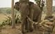 Chuyện con voi và sợi dây thừng: Không dám đối mặt với điểm yếu của bản thân, cả đời chẳng bao giờ thành công!