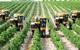 Sắp có gói tín dụng 100.000 tỉ đồng cho nông nghiệp công nghệ cao