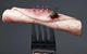 Chính xác điều gì đã xảy ra khi ruồi đậu vào thức ăn của bạn?