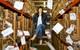 Câu chuyện khởi nghiệp: Kiếm cả chục triệu USD bằng việc bán thiệp giấy trong kỉ nguyên Internet