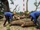 Hà Nội di dời, đốn hạ cả trăm cây xanh làm đường sắt
