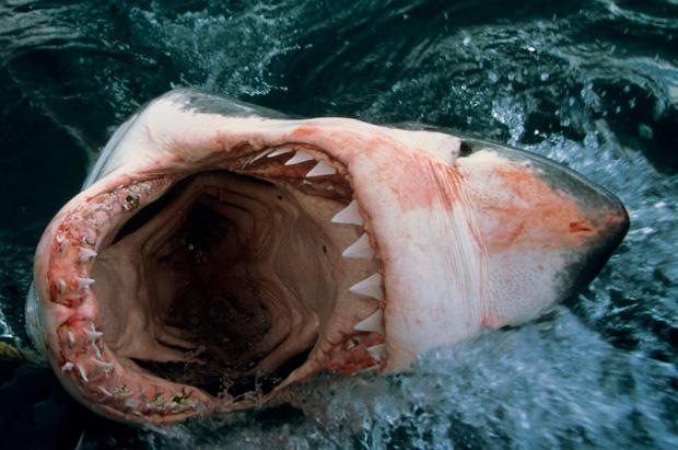 Kỷ lục người chết vì cá mập cắn suốt gần 100 năm tại Úc bị phá vỡ, lý do phía sau còn khiến chúng ta suy ngẫm nhiều hơn - Ảnh 5.